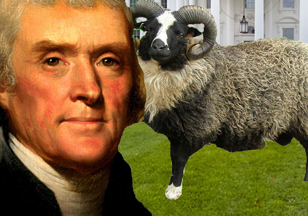 Thomas Jefferson's Shetland Sheep Kills Boy in 1808.