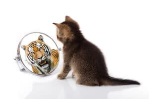 Tigers and Cats are closely related
