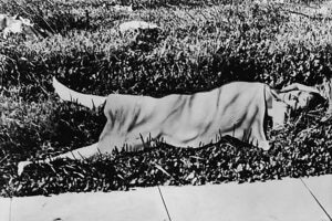 Black Dahlia crime scene photo